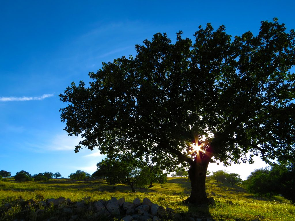 nature-arbre